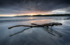 Driftwood at White Strand