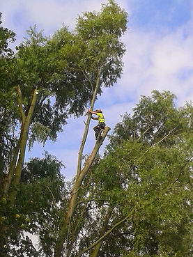 Special Branch Nottingham tree surgeon Dai Thompson
