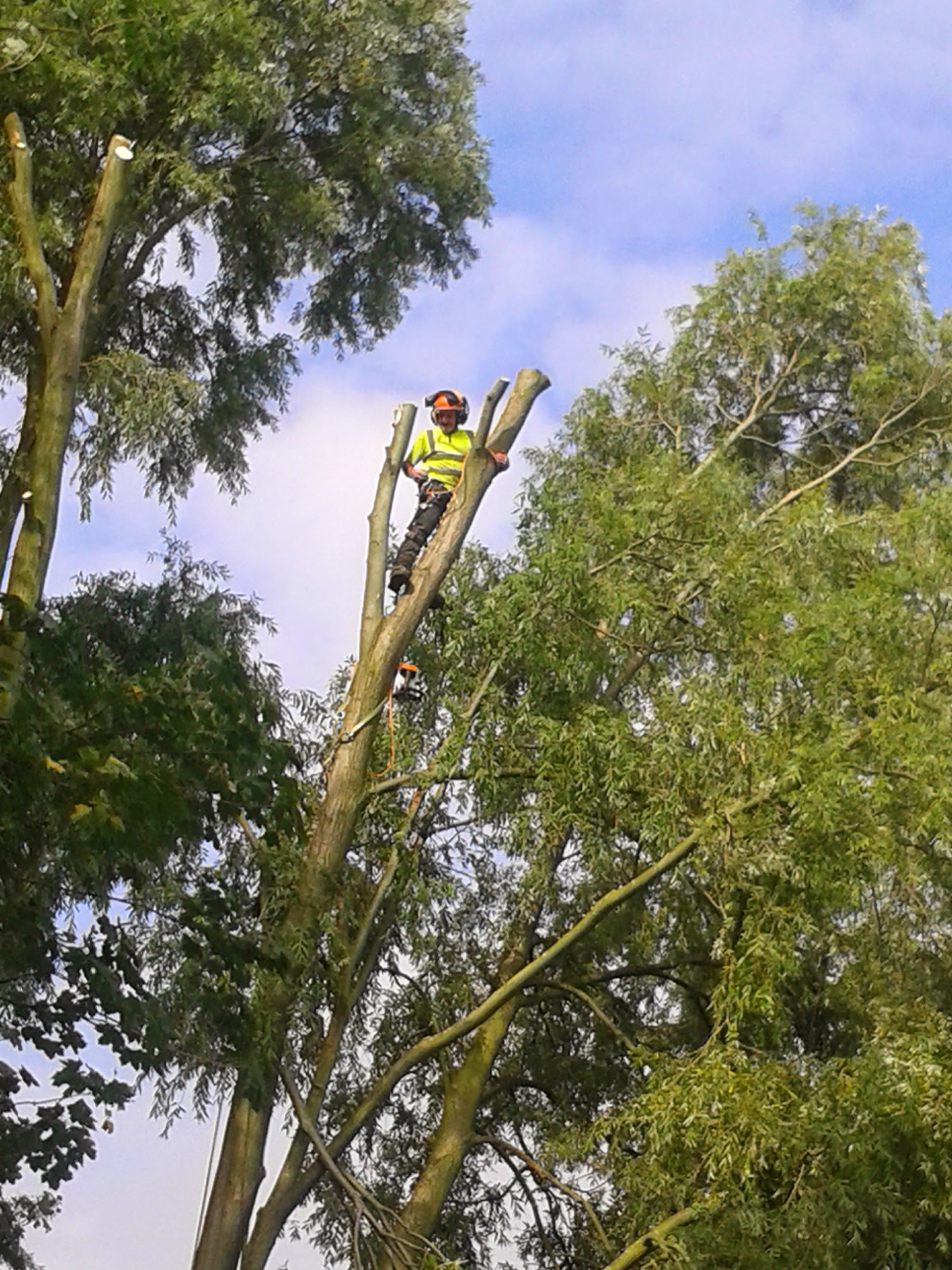 Dai Thompson tree surgeon Nottingham
