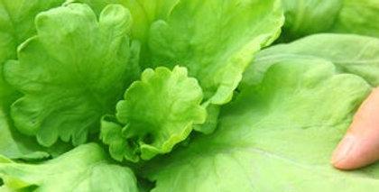 Garland round leaf