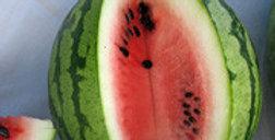Watermelon - Mayo sandia