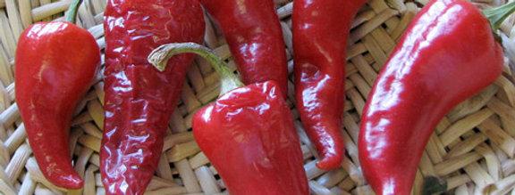 Pepper - Jemez