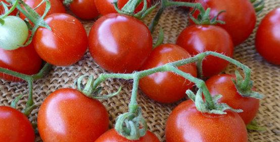 Tomato. Punta banda