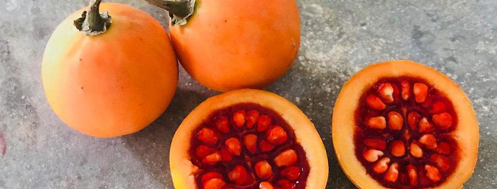 Solanum glaucescens - Cuatomate