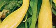 Squash - Yellow Crookneck
