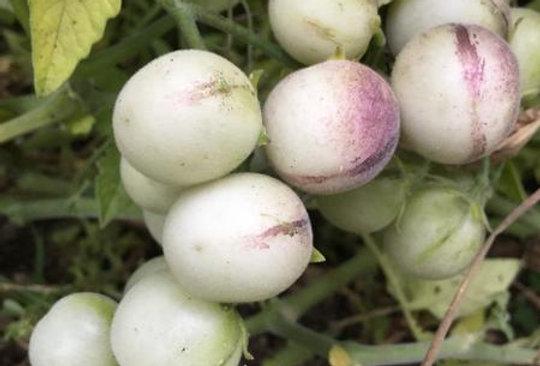 Tomato - Wild peruvian