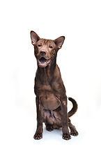 MOJO THE DOG Office Pet