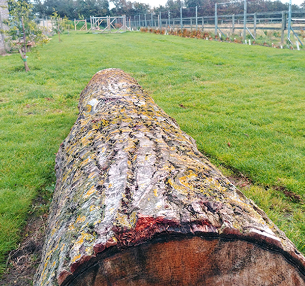 Great Paddock Log.png