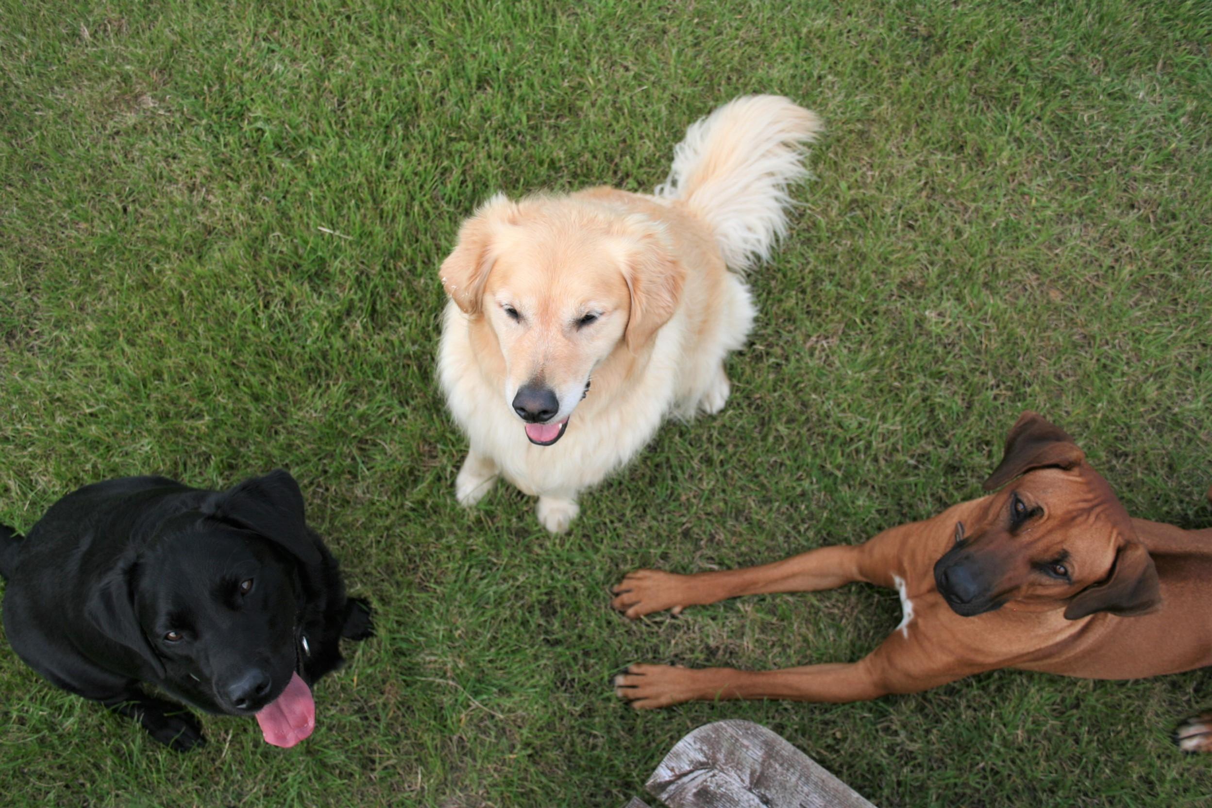 K9 Café Large Dogs