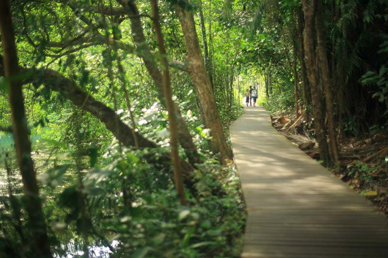 森林浴日和