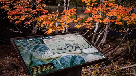 Longmire Mt, Rainier National Park, WA