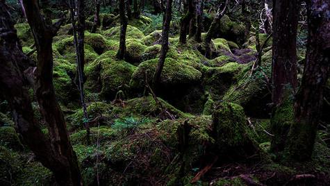苔むす森  白駒の池 長野