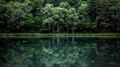 静寂の湖畔  立岩湖 長野
