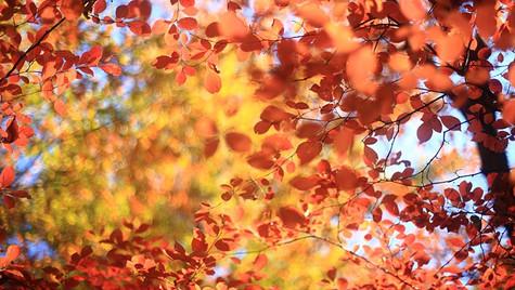 印象的秋彩