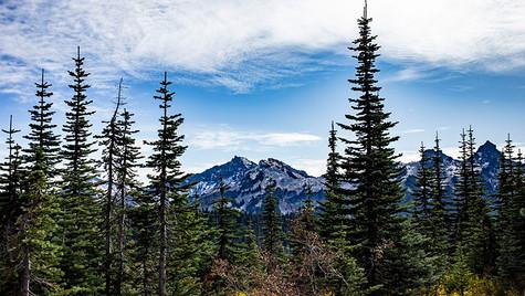Paradise Mt, Rainier National Park, WA