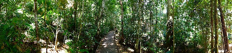 Advance Psychology Consulting - Rainforest Walk
