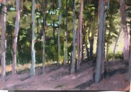 Late sun through trees