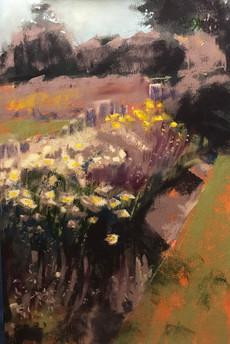 Harwich Widlflowers