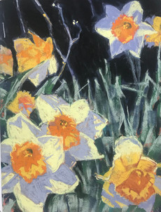 Daffodils - A Little Closer