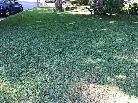 Custom lawn care programs. We specialize in the maintenance of residential and commercial properties.