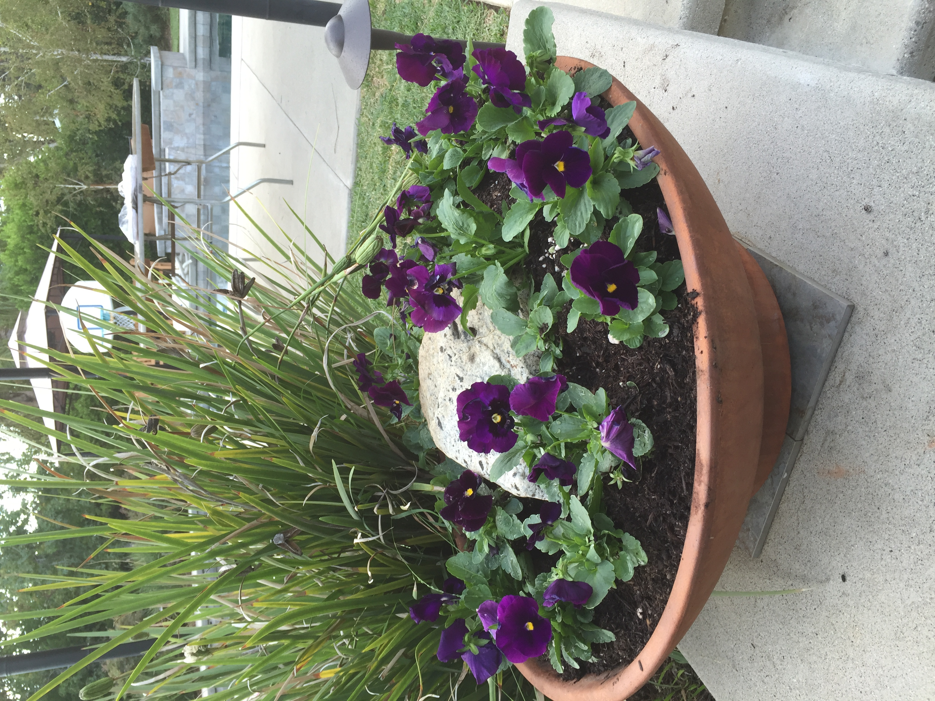 River rock with pansies