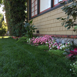 Flowers and lawn