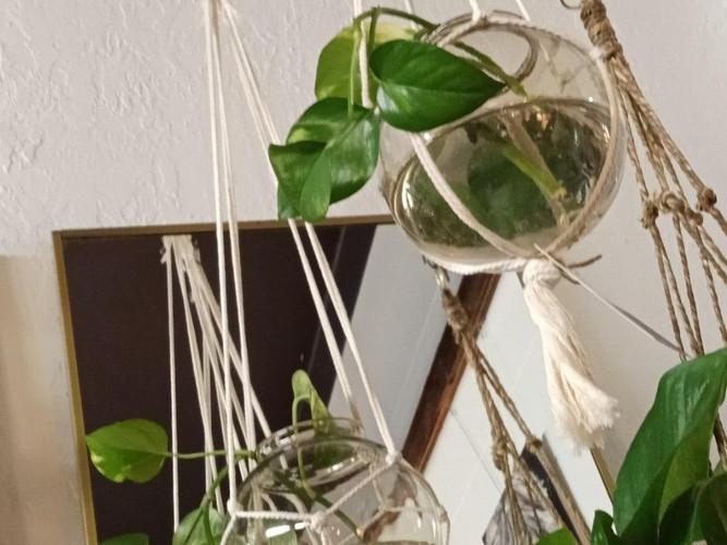 hanging plant vessels.jpg