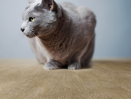 What flooring is best for pets?