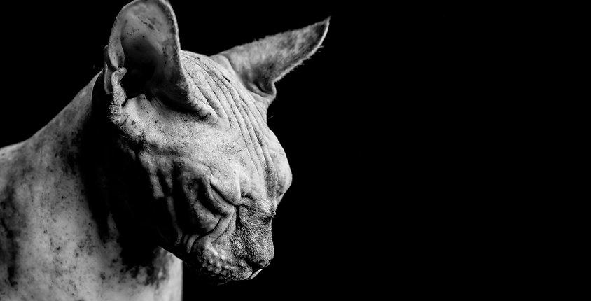huisdieren, kattenfotografie