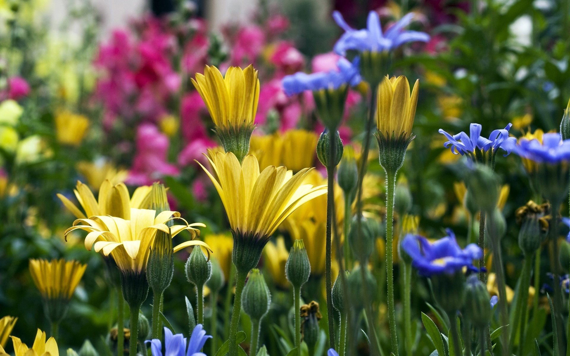 spring-meadow-pictures