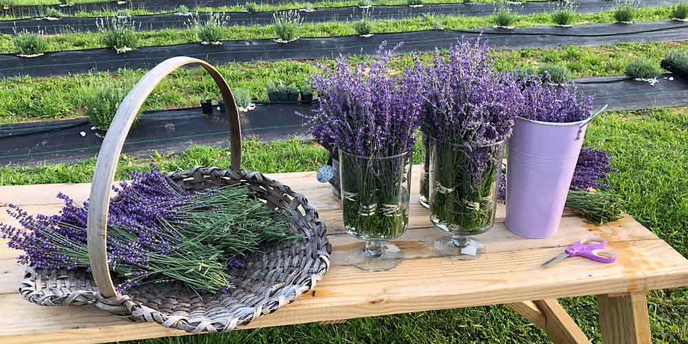 ~SOLD OUT~ Learn to Make a Fresh Lavender Wreath!