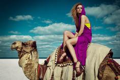 Greg Lotus Camel Uva 9x12 100.jpg