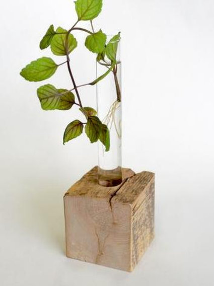 Propagation Vase - Single