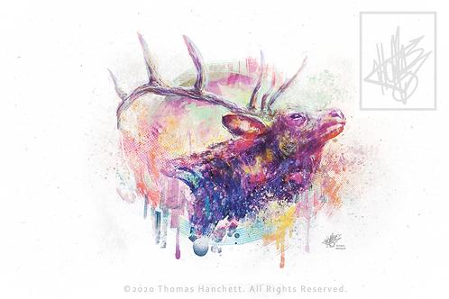 "Elk Postcard Matte (6x4"")"