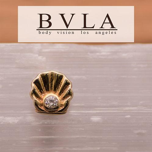 BVLA Scallop
