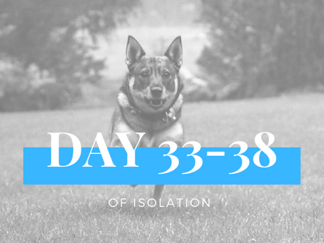 DAY 33-38