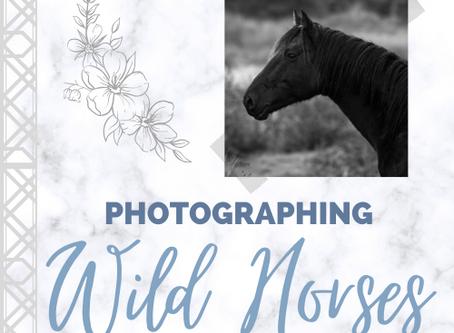 Photographing Wild Horses