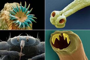 parasitescomposite.jpg
