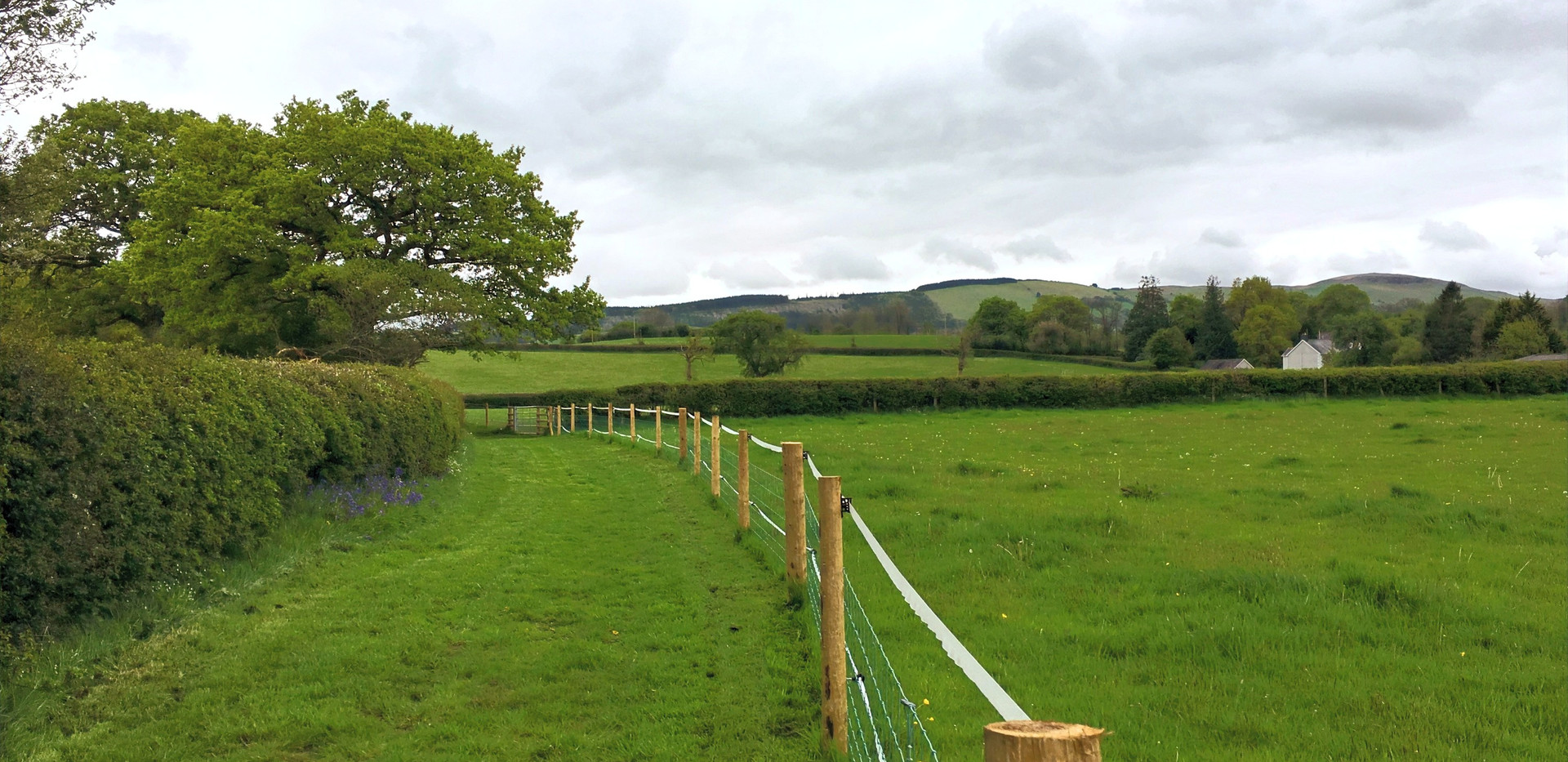 Fenced dog walk and orchard