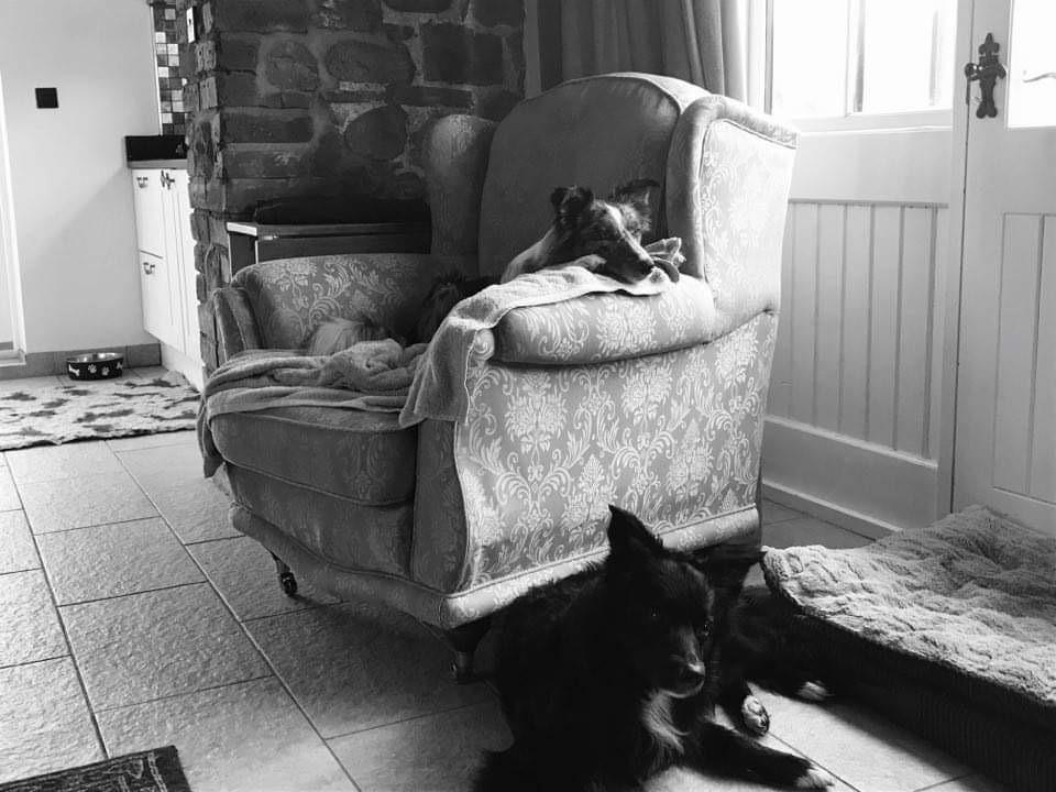 Dogs relaxing in Derwen Coach house