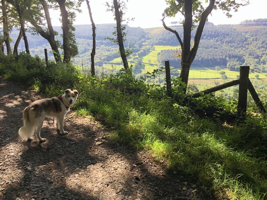 Brechfa Forest Walk