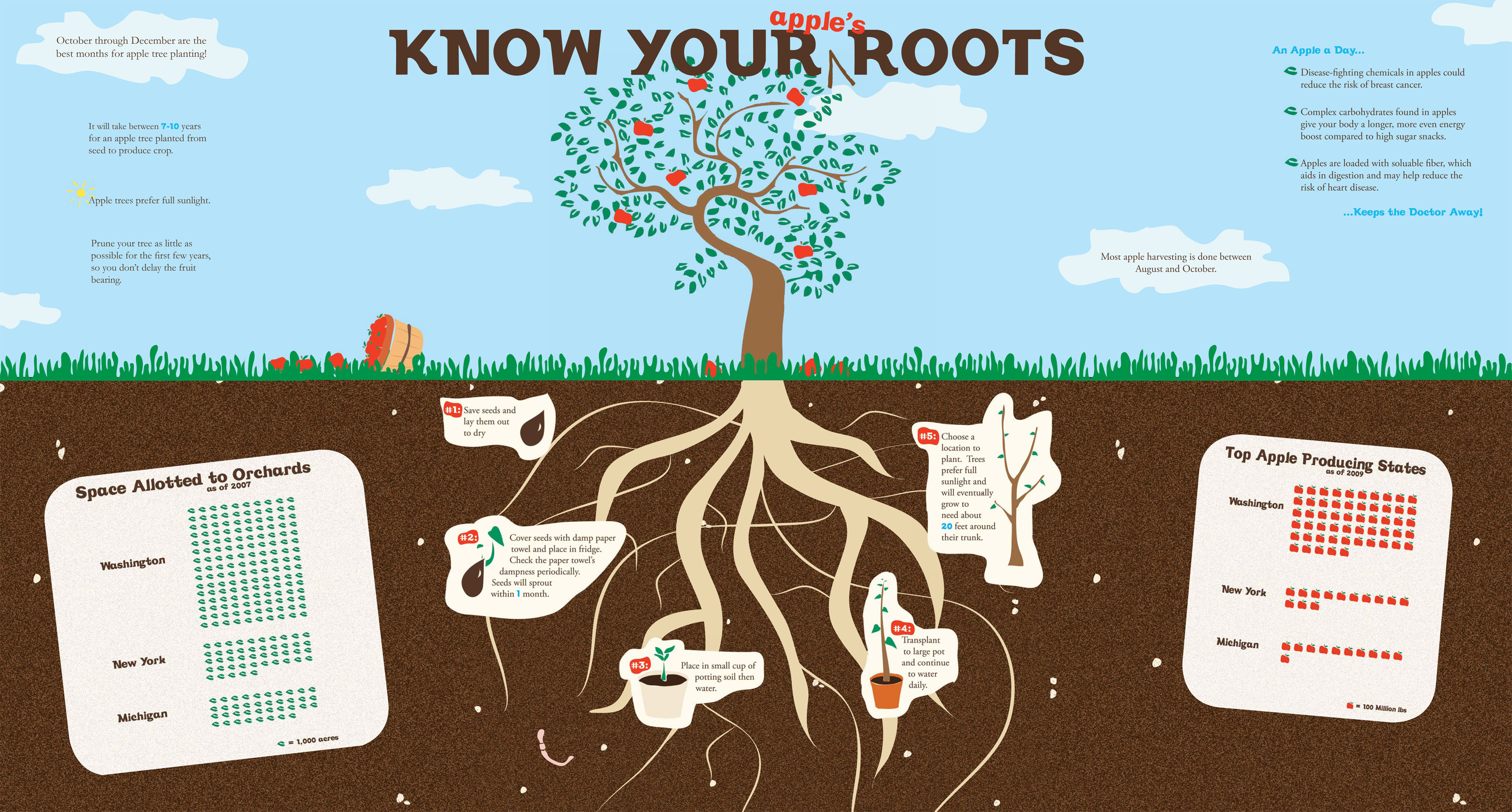 Know your (apple's) roots!