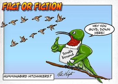 Humming bird hitchiker.jpg