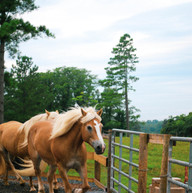 Morning Excersize