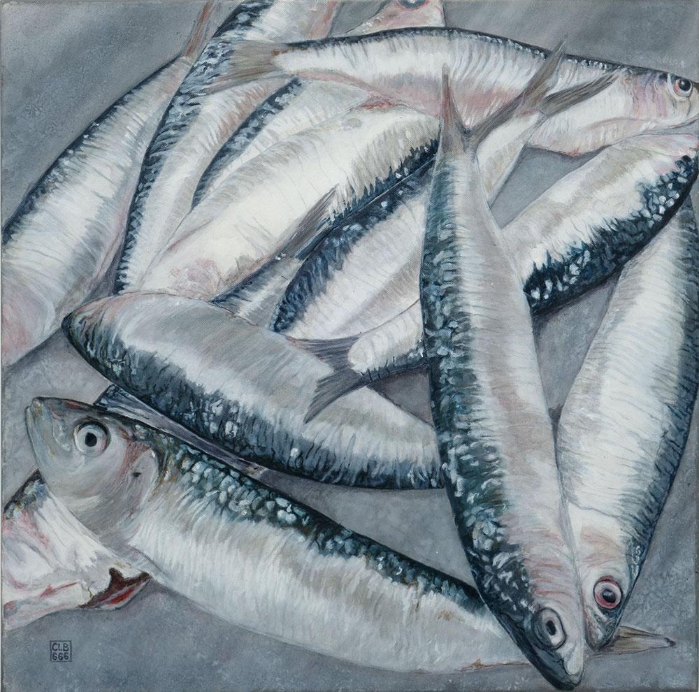 60x60 Dance des Sardines