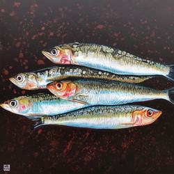 les sardines de l'ile de ré