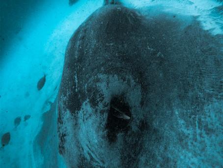 Reimagined Ocean Conservation