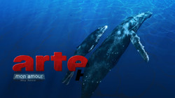 ARTE - Style 01