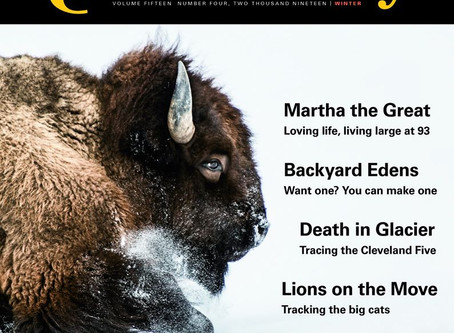 Back to the Mother Featured in Winter Issue of Montana Quarterly!