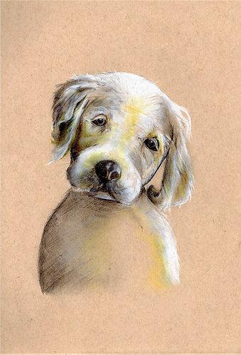 'Puppy Eyes'